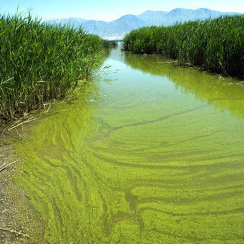 WATER QUALITY: Challenged by intensifying algal blooms and public health risks from bacteria, the Utah Lake-Jordan River system needs comprehensive sociotechnical watershed management solutions.
